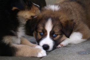 puppy-369430_1920
